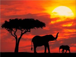 safarirejser